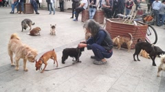Chinese old people and pet dogs - stock footage