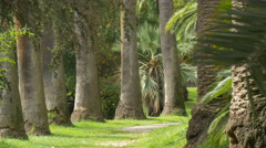 Tall trees in a park on a sunny day, Nice Stock Footage