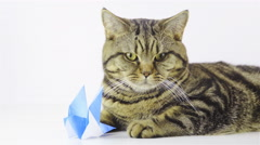 Cat posing with crane origami 4K Stock Footage