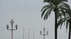 Street lamps and palm trees on Nice Promenade Stock Footage