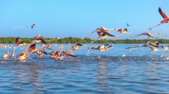 Flock of red flamingos flying slow motion Stock Footage