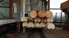 View on platform with logs moves for unload Stock Footage