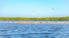 Red flamingos standing into rio lagartos lagoon sea Stock Footage
