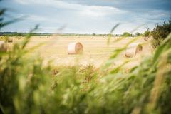 Landscape with hay bales and dark cloudy sky Stock Photos