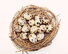 Nest with eggs of quails isolated - stock photo