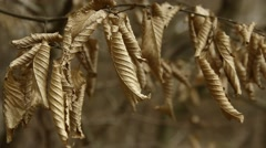 Dried brown leaves in the forest Stock Footage