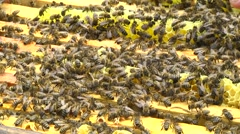 Many bees. Apiary. Honey - stock footage