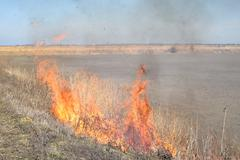 Burning dry grass and reeds - stock photo