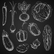Fresh vegetables chalk sketches set - stock illustration