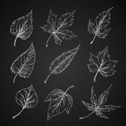 Leaves silhouettes chalk cketches set Stock Illustration