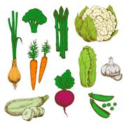 Farm vegetables retro color sketches - stock illustration