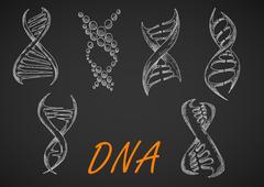 DNA helix models chalk sketches Stock Illustration