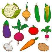 Color ripe vegetables sketches set - stock illustration