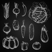 Autumn vegetables chalk sketches set - stock illustration