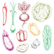 Color farm and garden vegetables sketches - stock illustration