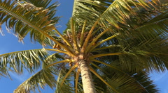 Palm tree from below at blue sky background Stock Footage