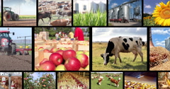 Agriculture - Food Production Multiscreen Stock Footage