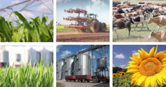 Agriculture - Food Production Multiscreen - stock footage