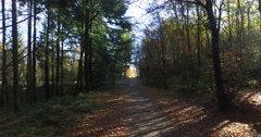 4k video of Autumn North Wood. Stock Footage