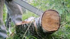 Man cuts away fresh birch in the forest, using electric chainsaws in slowmotion Stock Footage