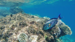 Exotic fish in the Red Sea Stock Footage