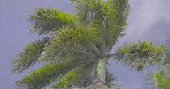 Palm tree leaves waving in wind - stock footage