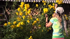 Woman gather yellow flower in country garden warm summer day. 4K Stock Footage
