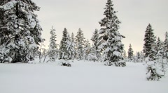 View to the trees covered with snow in winter in Saariselka, Finland. Stock Footage