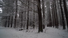 Panning up to snow covered branches on beautiful snowy day in the forest - stock footage