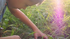 Child collects wild mushroom in the forest during sunset in slowmotion Stock Footage