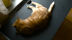 The Cat is on the Table Top View Stock Footage