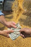 Agricultural concept, soybean crop and money in hands Stock Photos