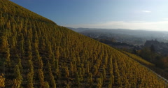 4k aerial video of wine hill in Autumn Stock Footage
