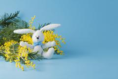 White rabbit and yellow mimosa Stock Photos