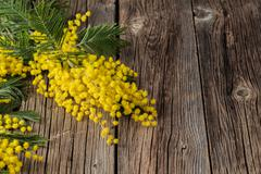 Easter time, yellow mimosa flowers on the old table Stock Photos