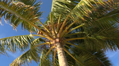 palm tree from below at blue sky background - stock footage