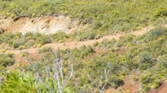 Isle of Pine Tourists Hiking Nga Mountain Trial Stock Footage