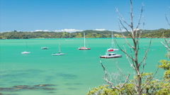 Sailing Boats in the Bay of Islands New Zealand Stock Footage
