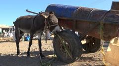 African landscape. Mule or donkey eats in a village - Sudan Stock Footage