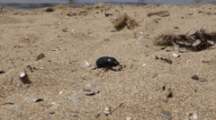 Beetle crawling on the beach Stock Footage