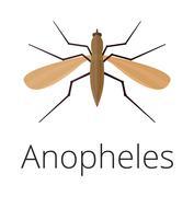 Anopheles mosquito vector illustration - stock illustration