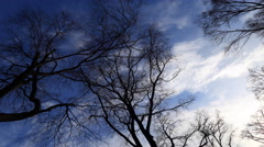 4k Sunset clouds timelapse naked trees overhead diagonal pan Stock Footage