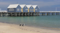 Busselton jetty and cormorants close up Stock Footage
