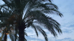 Palm trees on the promenade in Nice in the evening Stock Footage