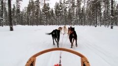 Dogs pull sledge by the winter forest trail in Saariselka, Finland. Stock Footage