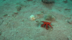 Red starfish and shell house - Adriatic sea, slider shot - stock footage