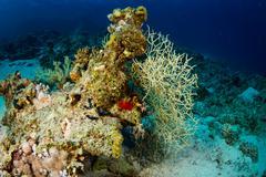 Coral garden Stock Photos