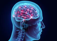 3D illustration brain nervous system active. Piirros