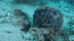 Underwater freshwater spring in Adriatic sea - freshwater and seawater mix Stock Footage