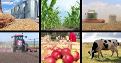 Agriculture - Food Production Collage Stock Footage